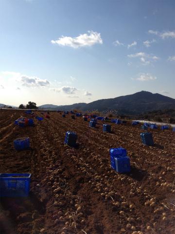 天気のいい日にジャガイモ掘り。