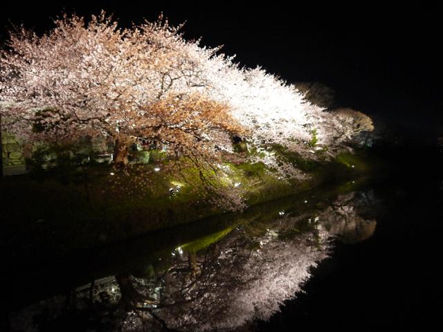 九州一周中!! 4月2日 福岡でゆっくり。桜が綺麗でした。 天神(福岡)明日から後半戦!